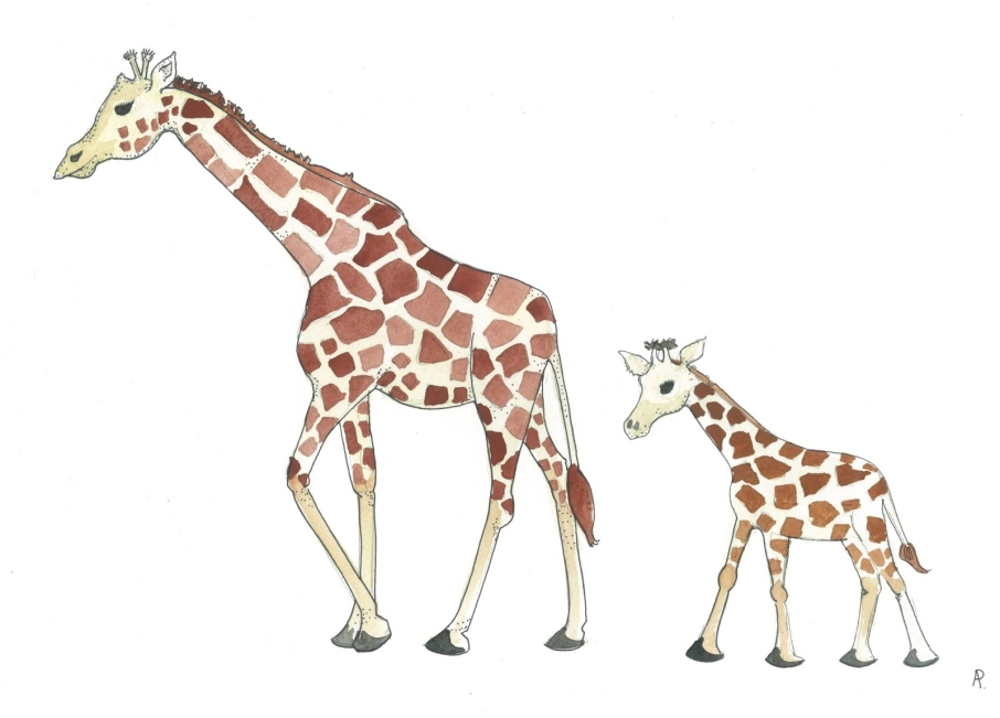 Baby Giraffe Drawing Mother And Baby Giraffe Drawing